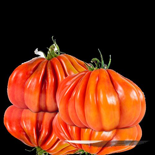 Tomate Corazón De Buey Fruta Y Verdura Cal Fruitós