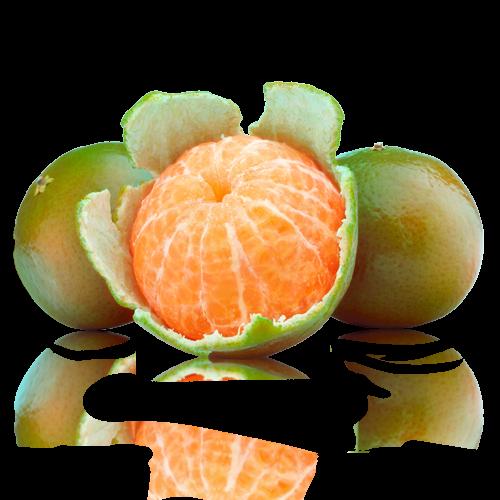 Mandarina Clausellina Extra Cal Fruitós
