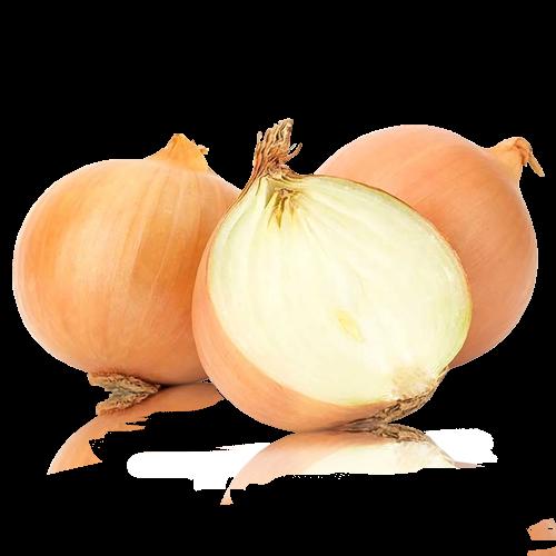 Cebolla  Bio