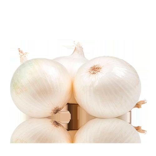 Ceba Blanca