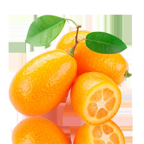 Komquat