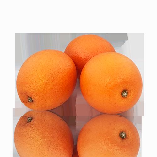 Naranja Nueva Cosecha