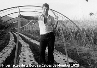 Hivernacles de Cal Fruitós al 1975